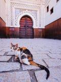 Кот в Fes, Марокко Стоковые Фотографии RF