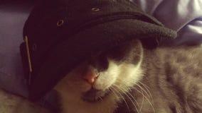 Кот гангстера скоростной в шляпе Стоковые Изображения