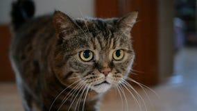 Кот говорит meow в замедленном движении сток-видео