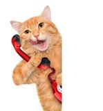 Кот говоря на телефоне стоковое фото
