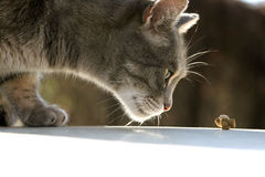 кот голодный Стоковая Фотография RF