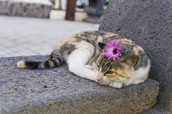 Кот гостиницы Стоковое Изображение