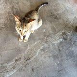 кот голодный Стоковые Изображения