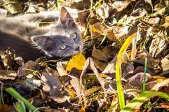 Кот двора среди листьев осени стоковое фото