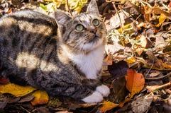 Кот двора среди листьев осени стоковое фото rf
