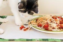 Кот делая беспорядок на таблице стоковое изображение rf