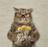 Кот держит мешок hryvnia золота стоковые изображения