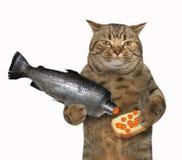 Кот держит сандвич с красной икрой стоковое изображение