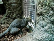 Кот джунглей в зоологических садах и аквариум в Берлине Германии Зоопарк Берлина посещать зоопарк в Европе, Стоковая Фотография