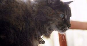 Кот дома 4k сток-видео