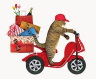 Кот едет мопед с сумками подарка стоковое изображение rf