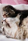 кот ее котенок стоковые изображения rf