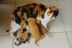 кот ее нянчить котят Стоковые Фото