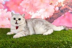 Кот лежа вниз на траве с розовой предпосылкой стоковое фото rf