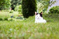 Кот лежа в траве стоковая фотография rf