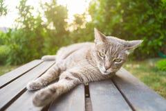 Кот лежа на деревянной скамье в backlight Стоковые Фото