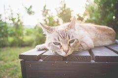 Кот лежа на деревянной скамье в backlight Стоковая Фотография