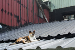 Кот лежа на крыше Стоковое Изображение RF