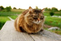 Кот лежа на стенде на предпосылке деревни травы Стоковое Изображение