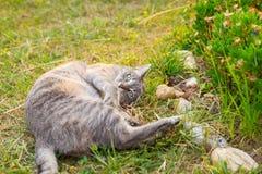 Кот лежа на стороне на траве смотря камеру Стоковые Изображения