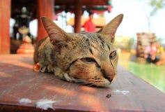 Кот лежа на таблице стоковое фото