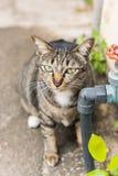 Кот лежа на цементе Селективный фокус Стоковые Фото