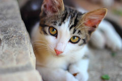 Кот лежа с красивыми глазами Стоковые Фото