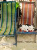 Кот лежит на sunbed пляже Стоковое Изображение RF