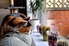 кот ленивый Стоковое фото RF