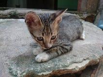 кот ленивый Стоковое Изображение RF