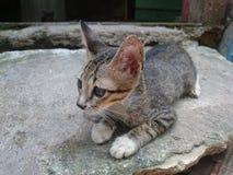 кот ленивый Стоковая Фотография RF