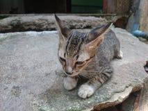 кот ленивый Стоковое Изображение