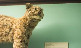 Кот леопарда Стоковое Изображение
