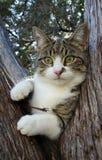 Кот дерева Стоковое Изображение