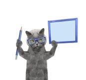 Кот держа карандаш и пробел Стоковая Фотография RF