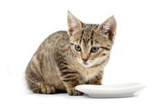 кот есть детенышей Стоковые Фото
