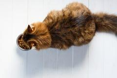 Кот есть от шара на белых деревянных планках Стоковое Изображение