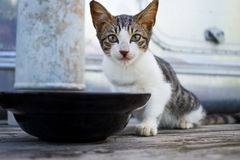Кот ест еду стоковые изображения rf