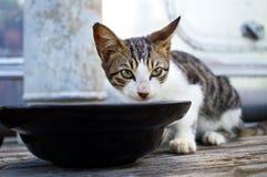 Кот ест еду Стоковые Фото