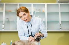 Кот женщины ветеринарный рассматривая Стоковые Фото