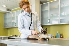 Кот женщины ветеринарный ausculting с стетоскопом Стоковая Фотография