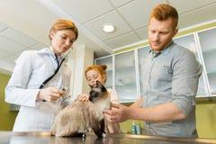 Кот женщины ветеринарный ausculting с стетоскопом Стоковое фото RF