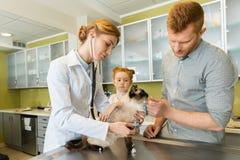 Кот женщины ветеринарный ausculting с стетоскопом Стоковые Изображения