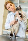 Кот женщины ветеринарный ausculting с стетоскопом Стоковое Изображение