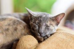 Кот, животное и любимчик спать Стоковые Изображения