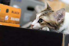 Кот ждет что-то Стоковое фото RF