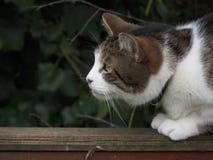 кот заискивая Стоковое фото RF