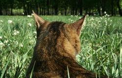 кот засады Стоковое Изображение