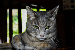Кот зеленого глаза Стоковое фото RF