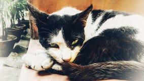 кот злющий стоковое фото rf